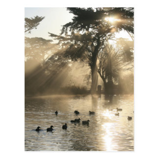 Sunrise Swimming At The Duck Pond Postcard