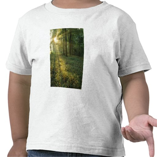 Sunrise through oak and hickory forest, Mammoth Shirts