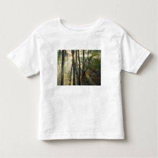 Sunrise through oak and hickory forest, toddler t-shirt