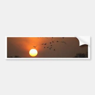 Sunrise with flocks of flying cranes bumper sticker