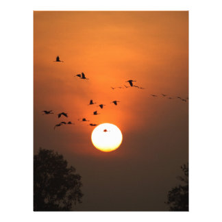 Sunrise with flocks of flying cranes letterhead