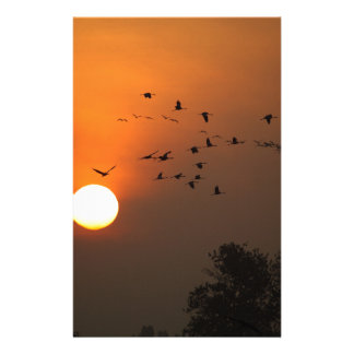 Sunrise with flocks of flying cranes stationery