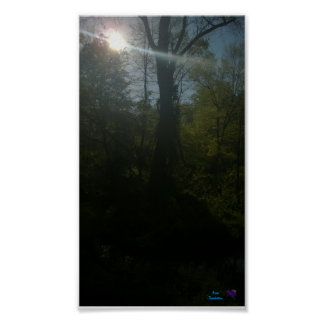 "Sunrise Woods Small (16.50"" x 11.00"") Value Poster"