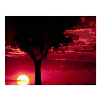 Sunset and Balanites Tree in Masai Mara Game Reser Postcard