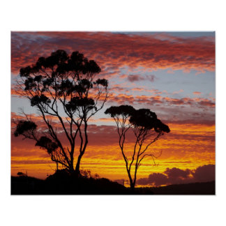 Sunset and Gum Tree, Binalong Bay, Bay of Fires, Poster