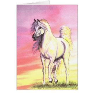 Sunset Arabian Horse Card
