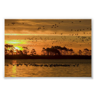 Sunset at Chincoteague Wildlife Refuge Virginia Poster