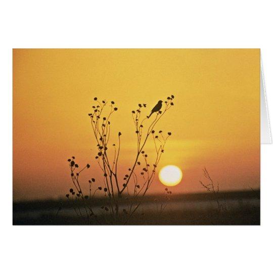 Sunset at Tewaukoa National Wildlife Refuge Card