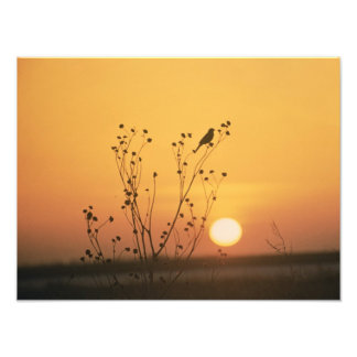 Sunset at Tewaukon National Wildlife Refuge Art Photo