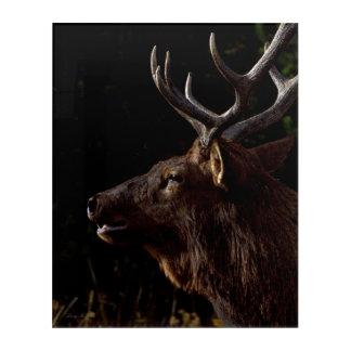 Sunset Bull Elk Acrylic Wall Art