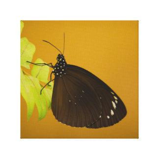Sunset Butterfly Design Canvas Print