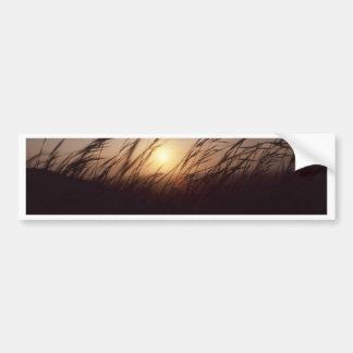 Sunset grasses.jpg bumper sticker