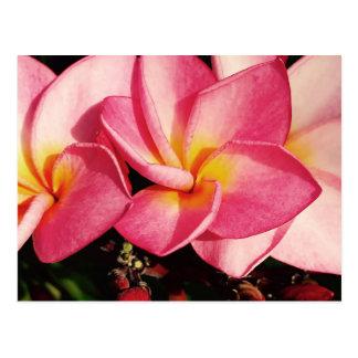 Sunset Hawaiian Plumeria Frangipani Trio Postcard