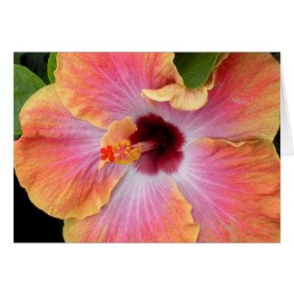 Sunset Hibiscus Card