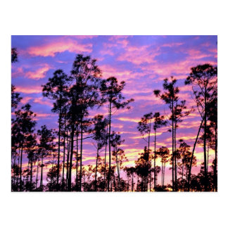 Sunset in Everglades National Park, Florida, U.S.A Postcard