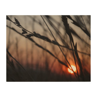 Sunset in the field Wood Wall Art
