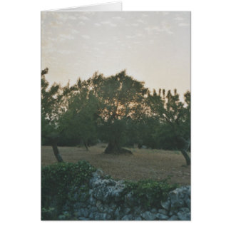 Sunset in the Olive Grove Card