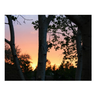 Sunset in the Trees Postcard