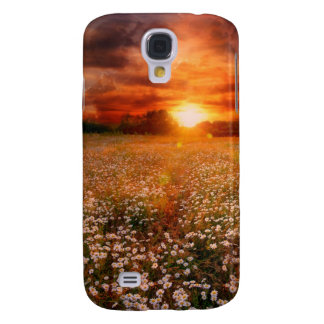 Sunset landscape with daisy field
