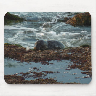 Sunset Lit Harbor Seal I at San Diego Mouse Pad