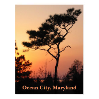 Sunset Ocean City Postcard