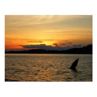 Sunset on the Lake Postcard