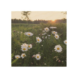 Sunset over Daisies Wall Art - Frost Hill Farms