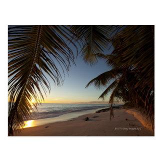 Sunset over Indian Ocean seen through palm Postcard