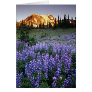 Sunset over Mt. Adams and a sub-alpine meadow Card