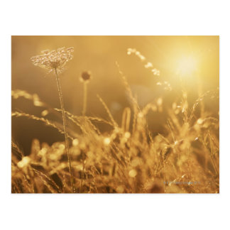 Sunset over summer meadow with lens flare postcard