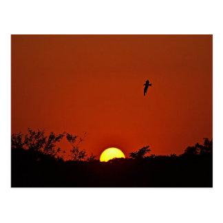 Sunset Over The Marsh Postcard
