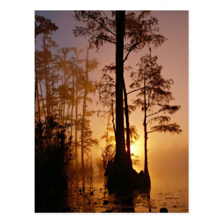 Sunset over the Okefenokee Swamp in Georgia Postcard
