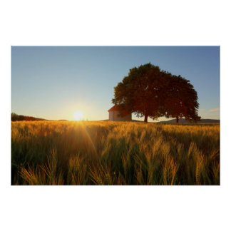 Sunset Over Wheat Field Poster