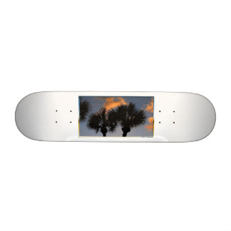 Sunset palm trees tropical skateboard