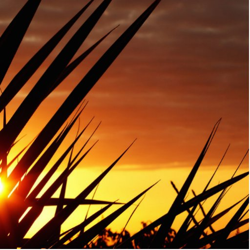 Sunset Photo Cutouts