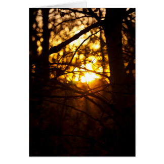 Sunset Poplars Card