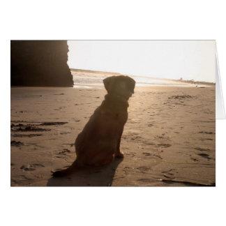 sunset puggle card