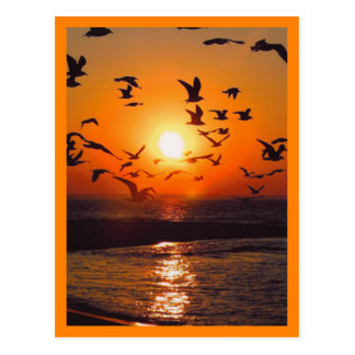 Sunset Scene Orange Border Postcard