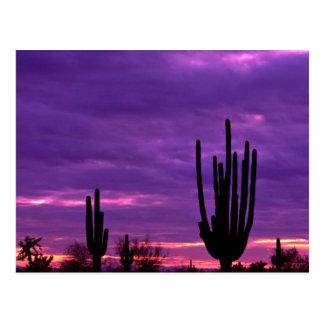 Sunset, Scottsdale, Arizona Postcard