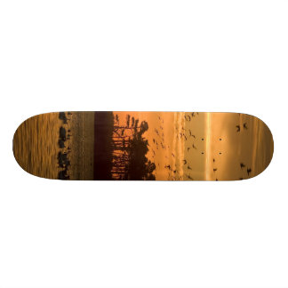 Sunset Skate Board Deck