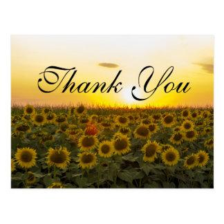 Sunset sunflowers Thank you card Postcard