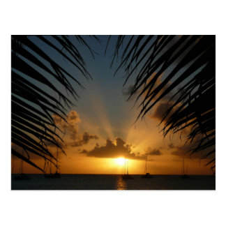 Sunset Through Palm Fronds Tropical Seascape Postcard