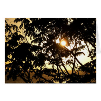 Sunset Through Trees I Tropical Photography Card