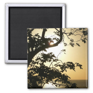 Sunset Through Trees I Tropical Photography Square Magnet
