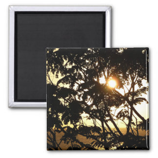Sunset Through Trees Magnet