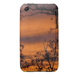 Sunset Tree iPhone 3 Covers