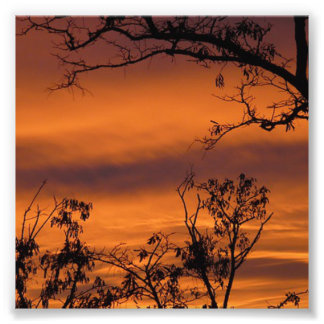 Sunset Tree Photo Print