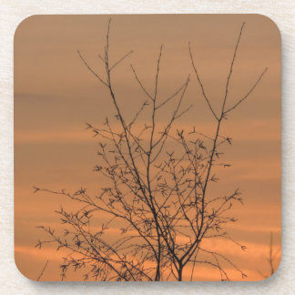 Sunset whit tree branches, colorful sky beverage coasters