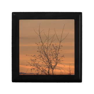 Sunset whit tree branches, colorful sky gift box