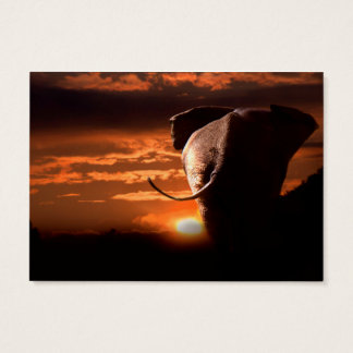 Sunset with Elephant Business Card
